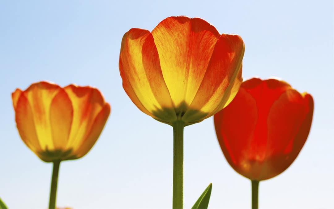 4 Ways to Grow Your Faith