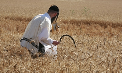 The 411 on Shavuot